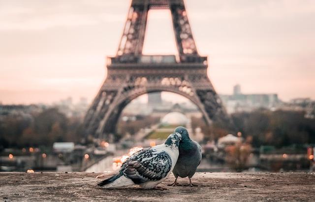 bird-2590901_640